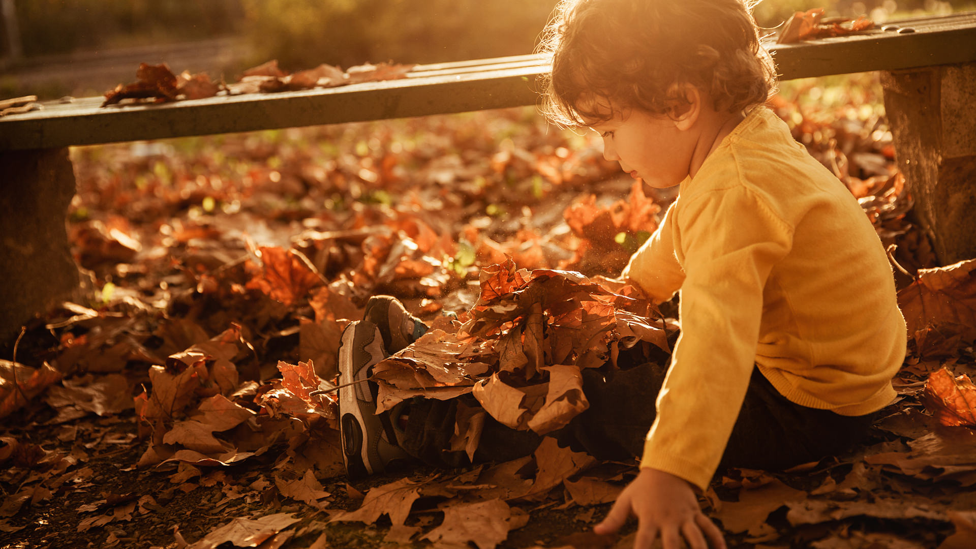 cphc_1920x1080_boy_fall_leaves